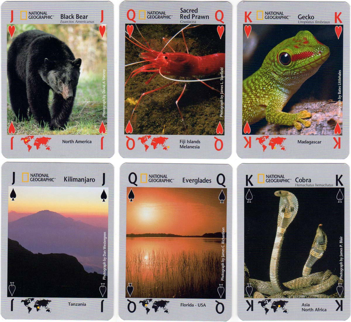 National Geographic Nature playing cards, 2006