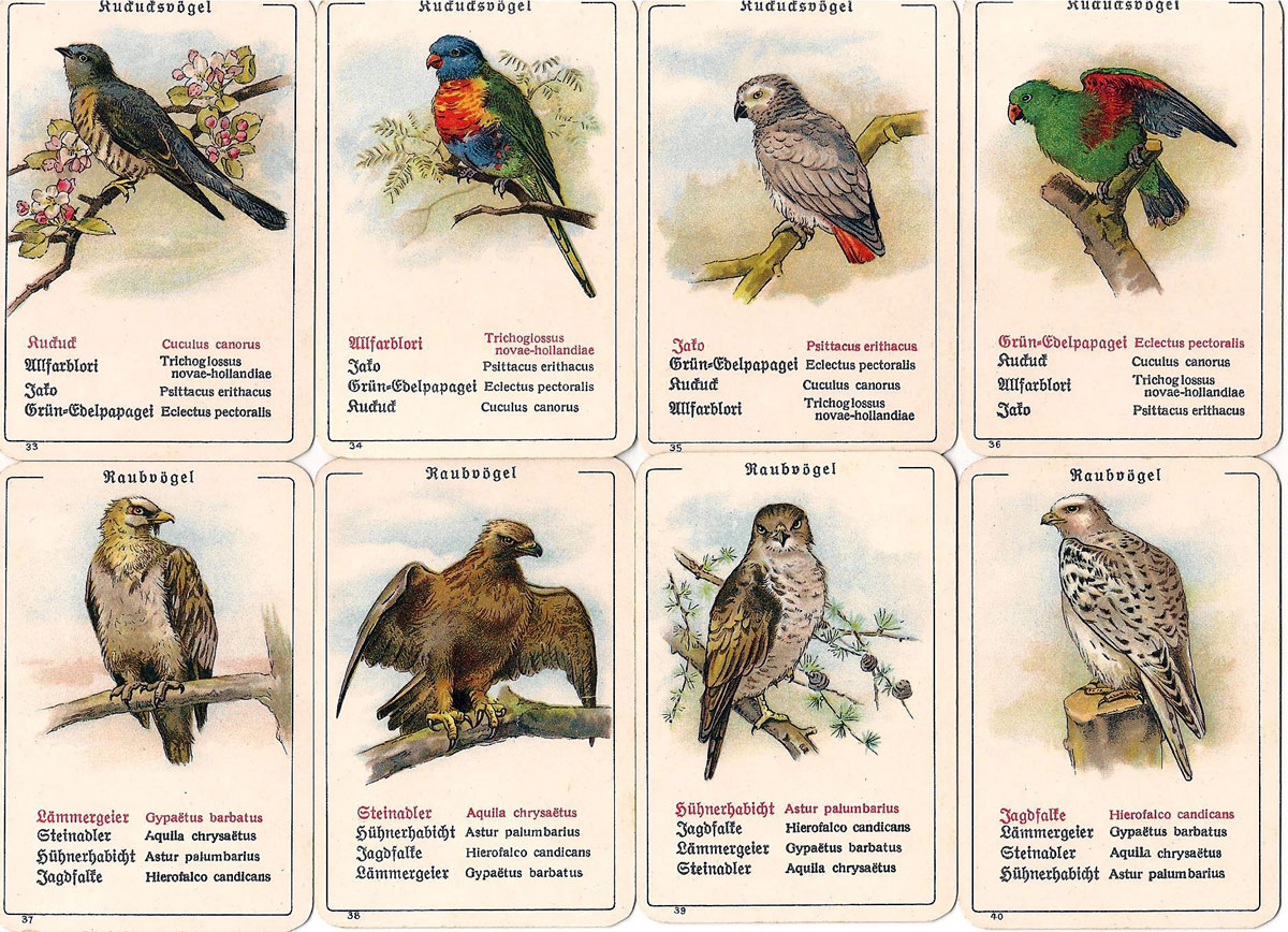 "Dondorf's ""Die Vogel-Welt"" No. 351 card game, c.1905"