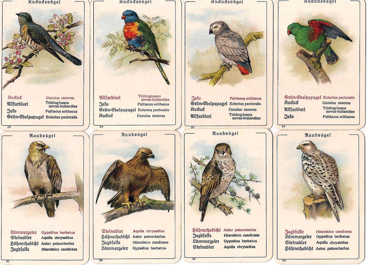 """Dondorf's """"Die Vogel-Welt"""" No. 351 card game, c.1905"""
