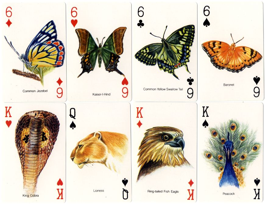 World Wide Fund for Nature-India Playing Cards