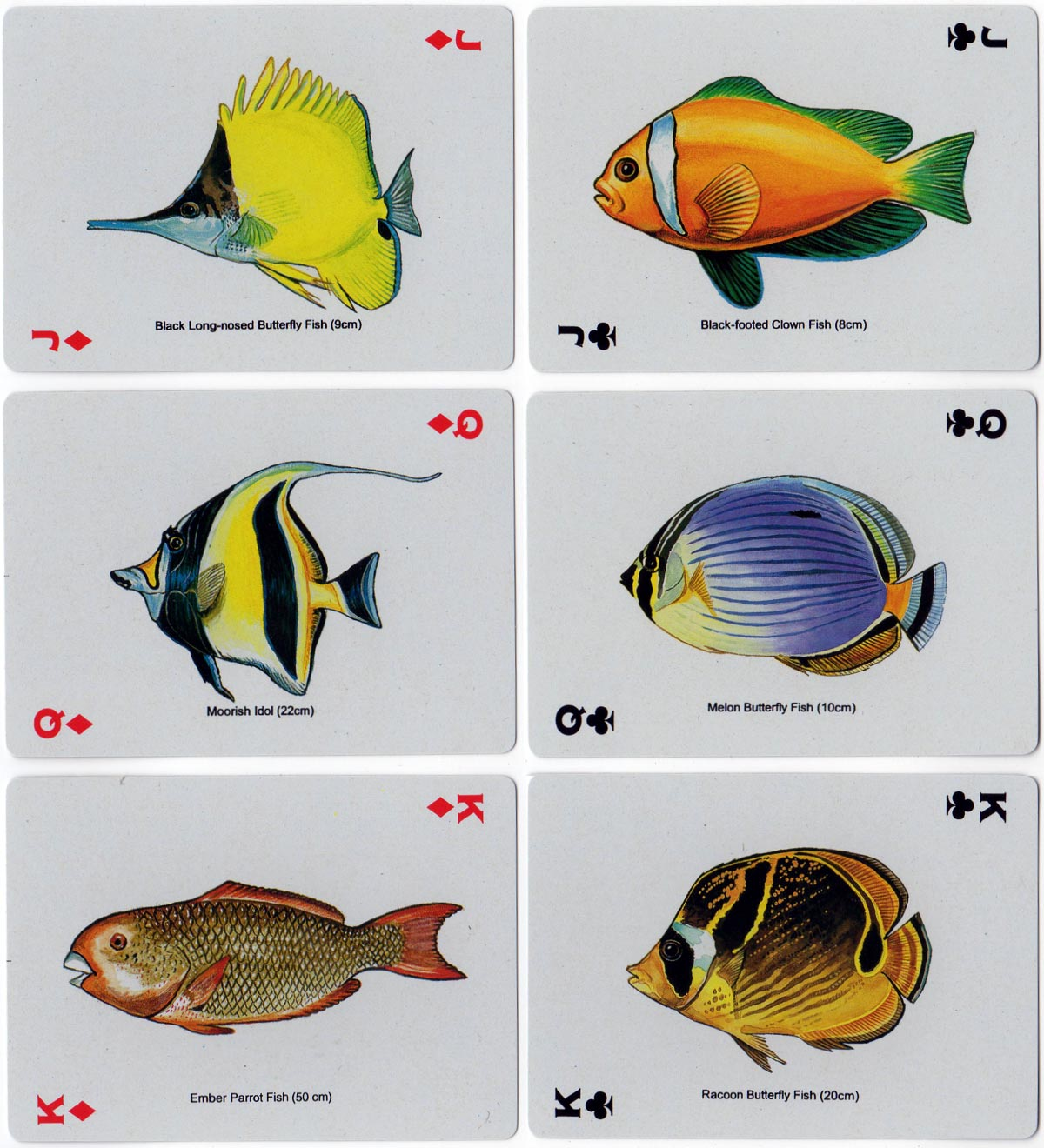 Fish Playing Cards by Bamboo
