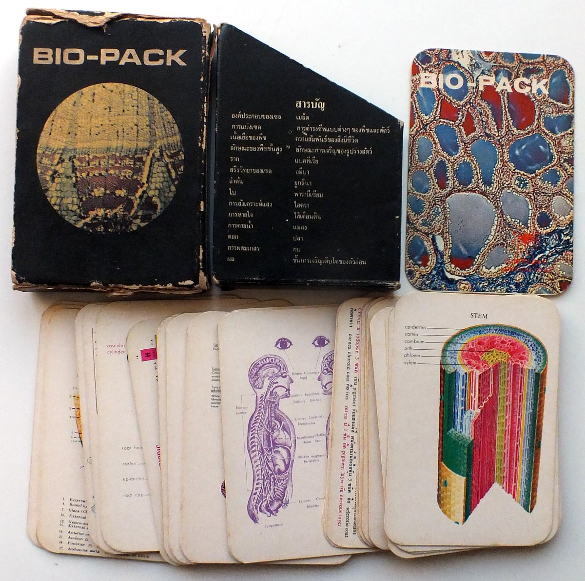 Bio-Pack biology flashcards produced for Thai students