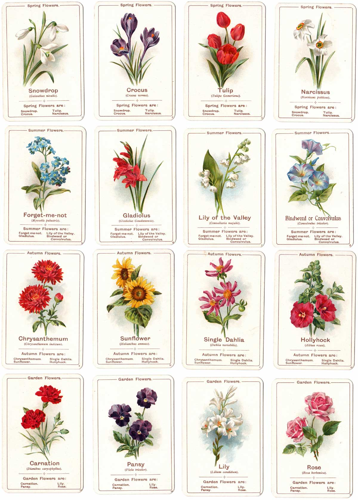 'Flora' card game published by C.W. Faulkner, printed by Dondorf, 1903