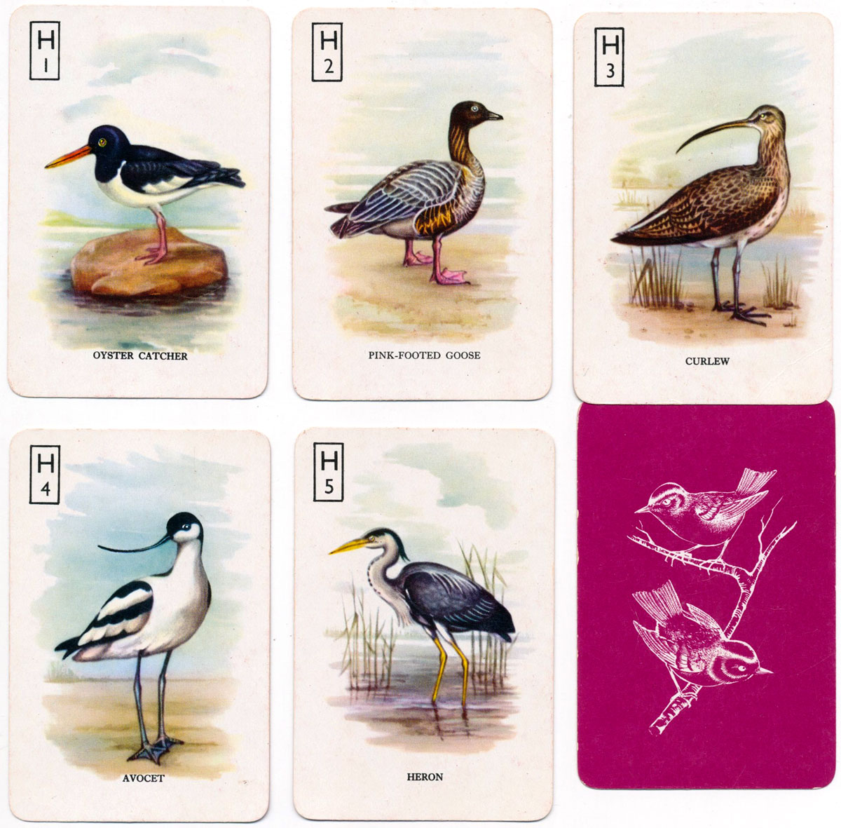 "Pepys ""British Birds"" card game with colour pictures, c.1968"