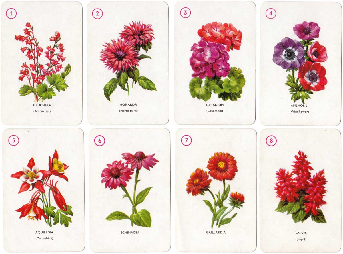 Garden Flowers card game designed by Dora Ratman, published by Pepys, 1961