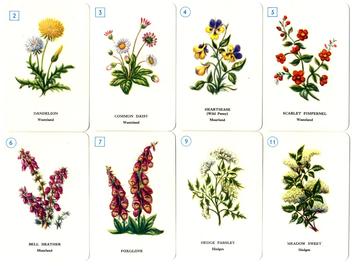 Outside Plants Wild Flower Sevens The World Of Playing Cards